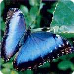 Farfalle - Schmetterlinge